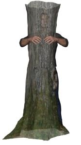Qi-Gong de l'Arbre, faire comme si on tenait un arbre dans ses bras