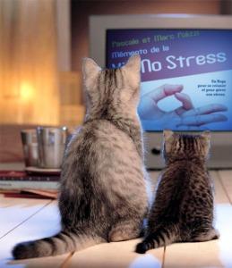 Yoga No Stress